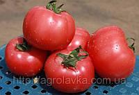 Семена Томата ГРИФОН (8007) F1  500 семян Nunhems