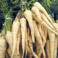 Семена корневой петрушки Арат, Bejo 500 грамм   профессиональные