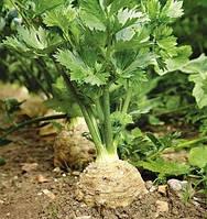 Семена сельдерея Балена, Bejo 10 000 семян | профессиональные