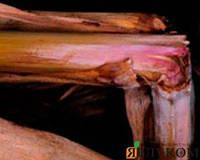 Стеблові гнилі кукурудзи