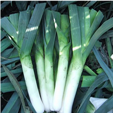 Семена лука Джампер F1, Bejo 10 000 семян (калибр)