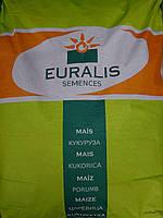 Семена Кукурузы Евралис Гармониум ФАО380