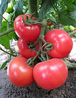 Семена томата индетерминантного Хитомакс F1 1 шт, Kitano