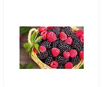 Делипаста Лесные ягоды. Delilpaste Wild fruits . Fabbri 1905, Италия, 100 гнаполнитель для конфет