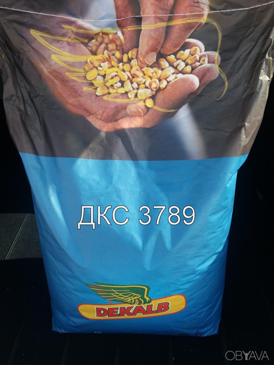 Семена кукурузы ДКС 3789
