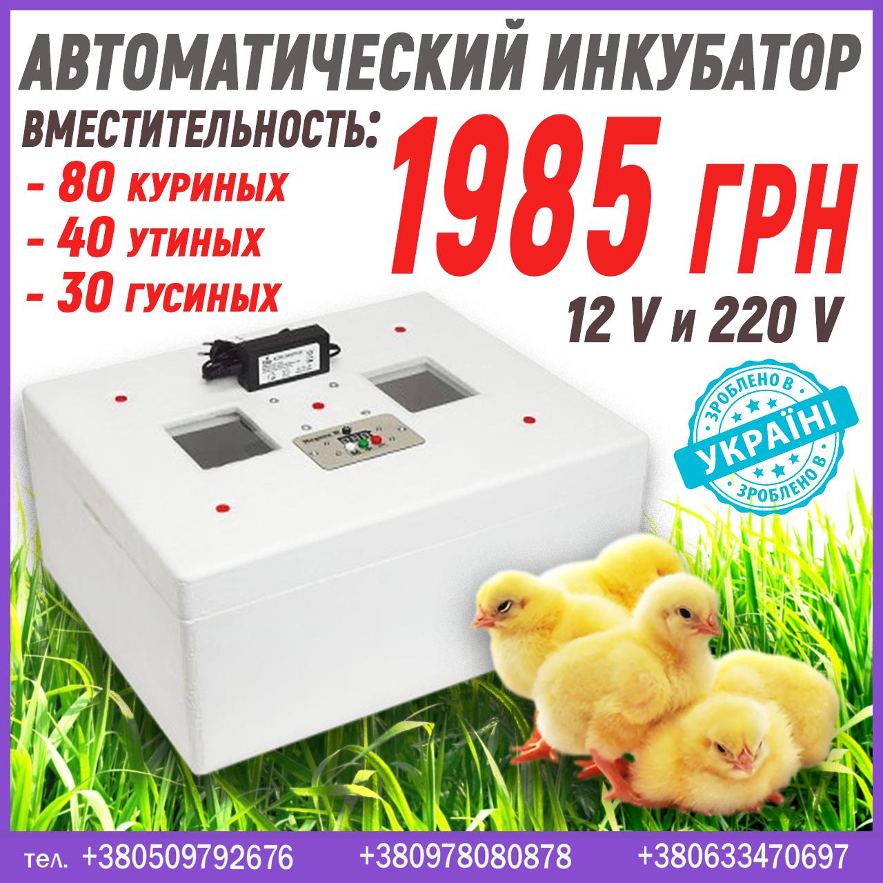 Инкубатор для дома на 12 В и 220 В