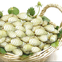 Семена Вайт Соул (Фасовка: 0,1 г; Цвет: белый)