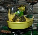 Купалка для птиц Ferplast, фото 5