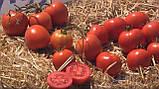 Мамако F1 500, 2500 шт насіння томату низькорослого Syngenta Голландія, фото 2