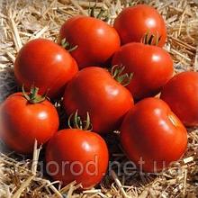 Мамако F1 500, 2500 шт насіння томату низькорослого Syngenta Голландія