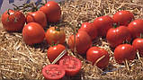 Мамако F1 10 шт насіння томату низькорослого Syngenta Голландія, фото 2