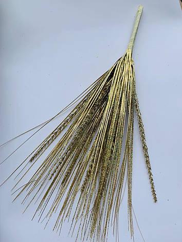 Трава берграс золотой с колосом (50 см), фото 2