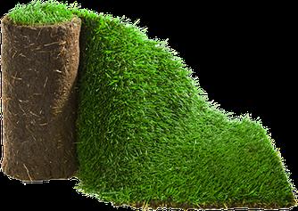 Рулонный газон Парковый - теневыносливый