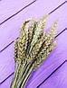 Колоски пшеницы натуральной букет