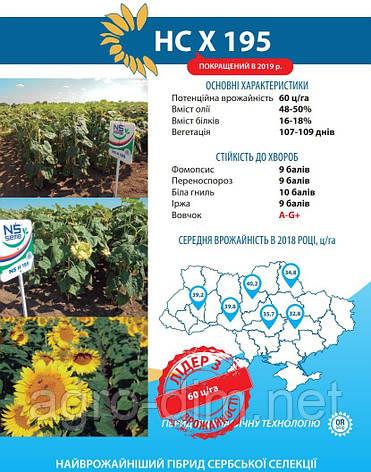 Семена подсолнечника НС Х 195 A-G+, фото 2