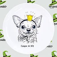 Дизайнерская тарелка Чихуахуа