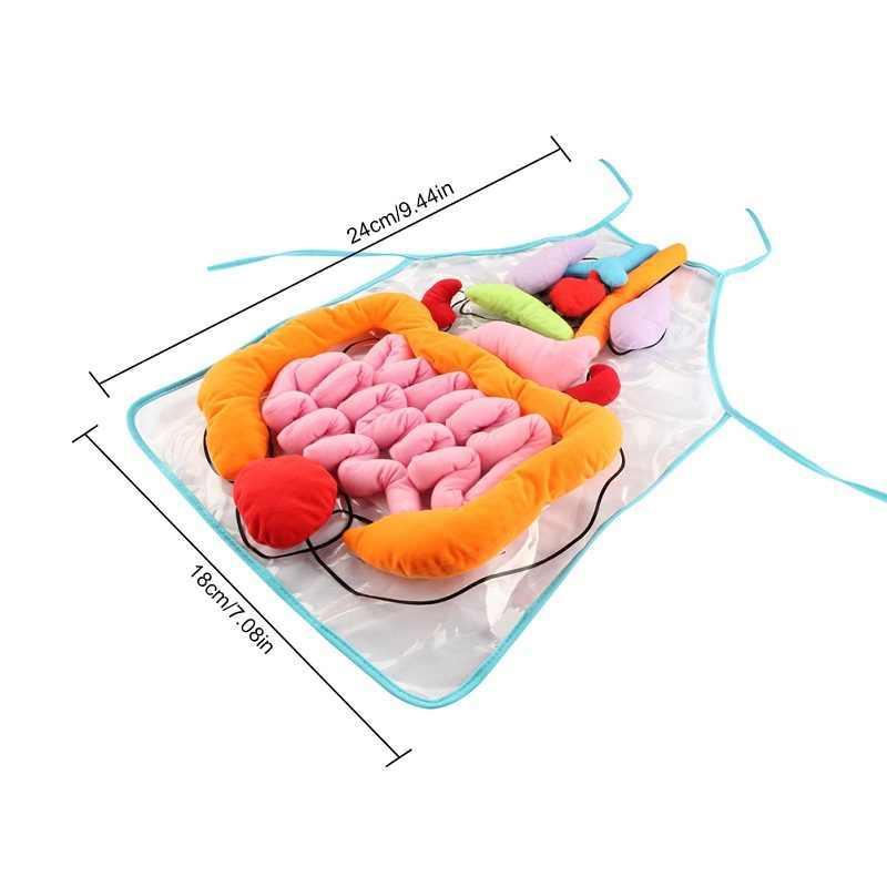Модель-фартух «Внутрішня будова тіла людини»