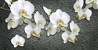 Фотообои Орхидеи арт. 130720182