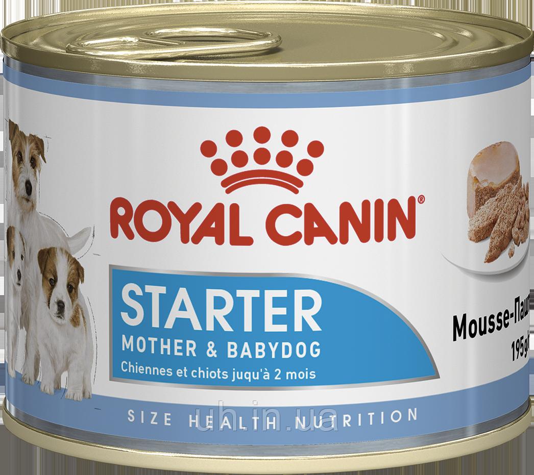 Royal Canin Starter Mousse вологий корм для цуценят і сук при вагітності і лактації 0,195 КГ