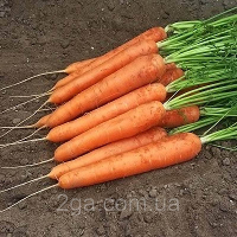Спидо F1/ Spido F1 - Морковь, Hazera. 25 000 семян