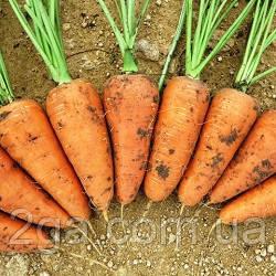 Шантанэ Рэд Коред / Shantane Red Kored - Морковь, Vilmorin (Hazera). 0.5 кг семян