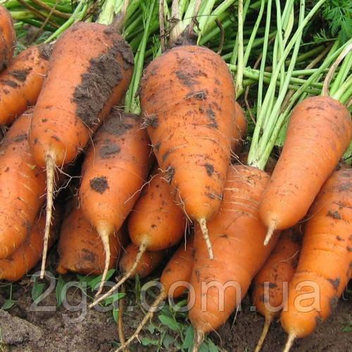 Курода Шантанэ / Kuroda Shantanu – Морковь, Sakata. 250 грамм семян
