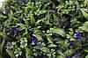 Трава искусственная №5 Фиолетовый цветок, фото 3