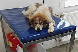 Мат для ветеринарных клиник, питомников, гостиниц (все размеры)