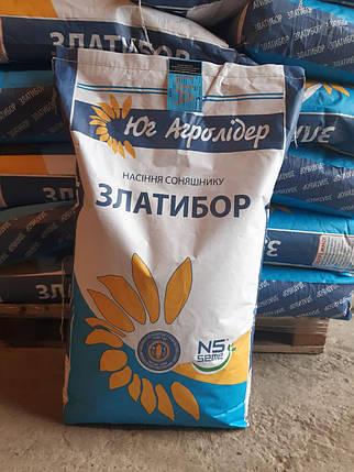 Насіння соняшнику ЗЛАТИБОР (екстра), фото 2