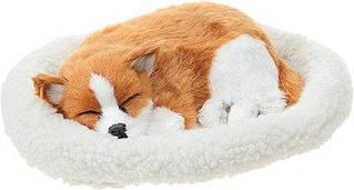 Pet Dreamz Папильон