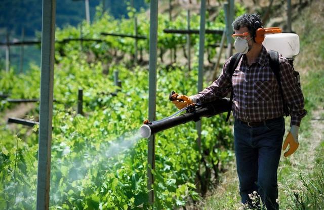Классификация средств защиты растений от насекомых. Инсектициды купить в Украине