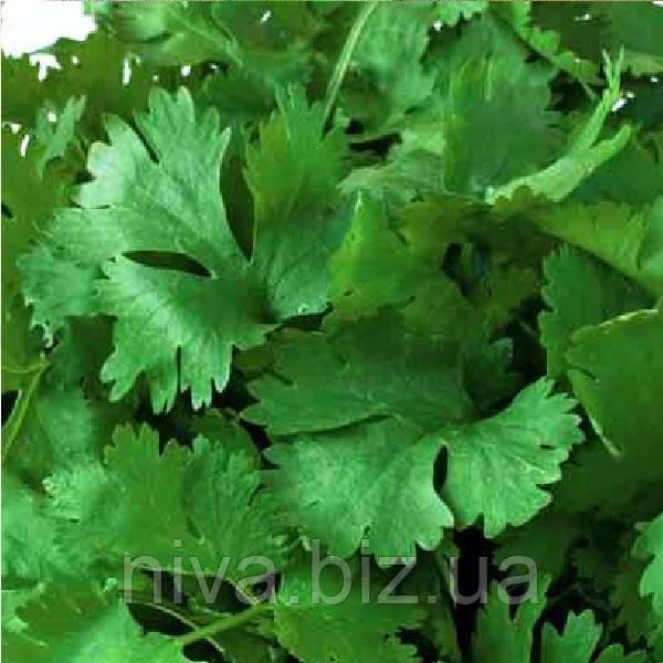 Мароканский семена кориандра/кинзы Euroseed 100 г