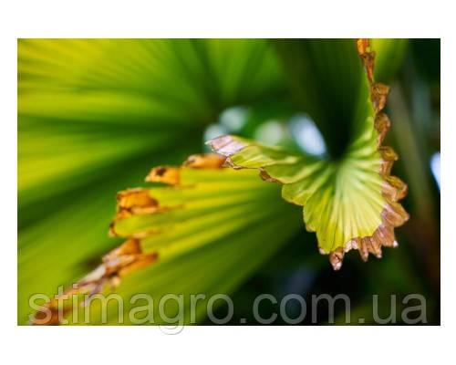 Хлороз рослини