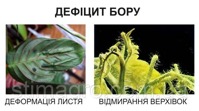 Дефіцит бору в рослинах