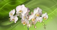 Фотообои  ЗД Орхидеи   арт. 161120184
