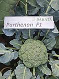 Партенон F1 / Parthenon F1 - Капуста броколі, Sakata. 1000 насінин, фото 3