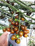 Криспина Плюм F1 / Crispina Plum F1 - Томат черри, Esasem. 250 семян, фото 2