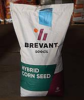 Семена Кукурузы П 9486, фото 1