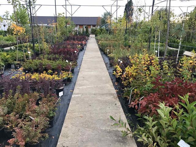 Саженцы Декоративных растений в ассортименте