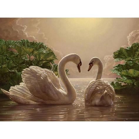 Картина по номерам Пара лебедей КНО301 40x50см Идейка, фото 2