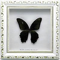 Бабочка в рамке 21х21х4 см 19859