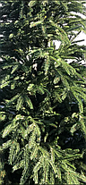 Лита Карпатська Смерека 1.8 м зелена, фото 2