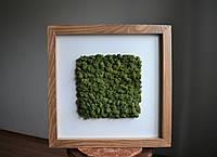 Панно з стабілізованого моху Ягель з паспарту, фото 1