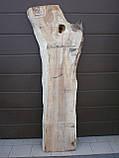 Слэб клён, фото 2
