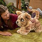 Король лев могучий Симба на анг.  Hasbro FurReal Disney Lion King Simba, фото 4