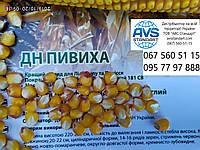 Вже в наявності. Насіння кукурудзи ранньої ДН Пивиха ФАО 180. Врожайний ранньостиглий, тривалість 65-85 ц/га Пивиха ДН з гарною вологоотдачею.