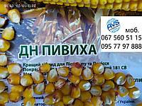 Топ продаж в своём сигменте. Урожайный гибрид кукурузы Пивиха ДН 65-85ц/га. Ранние семена ФАО 180 устойчивые к холодам и засухе ДН Пивиха. Уже на складах урожай 2019 года.
