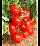 Линда F1 / Linda F1 - детерминантный томат, Sakata. 1000 семян, фото 2