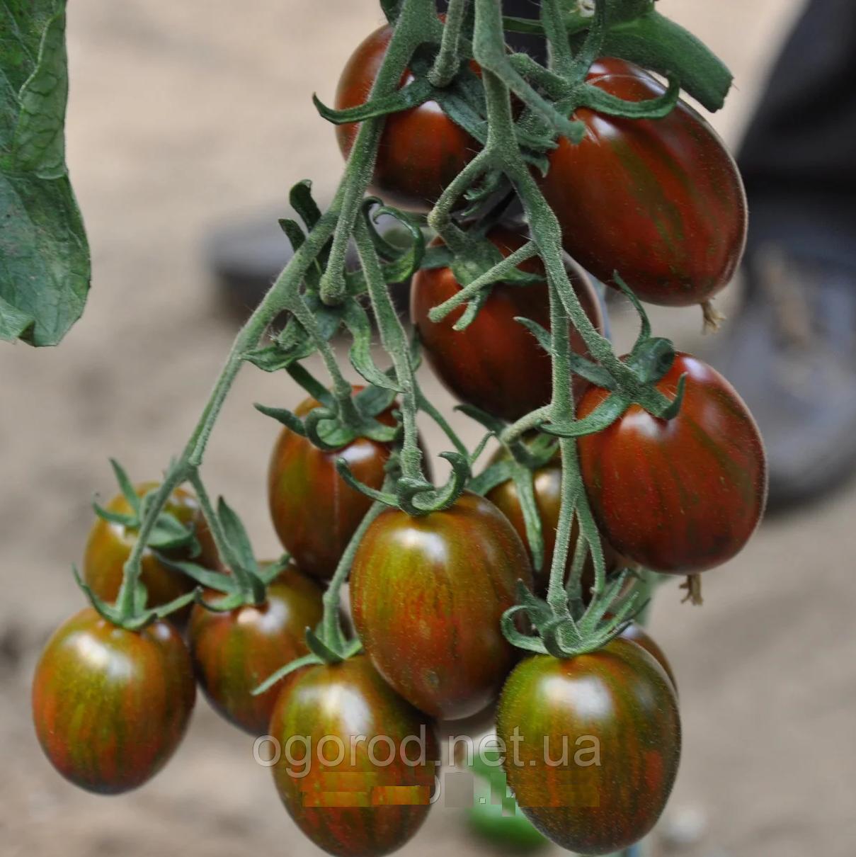 Криспина Плюм 250 шт семена томата тигрового высокорослого Esasem Италия