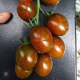 Криспина Плюм 250 шт семена томата тигрового высокорослого Esasem Италия, фото 2